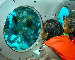 Bali-Cruises-Kapal-Selam-Odyssey