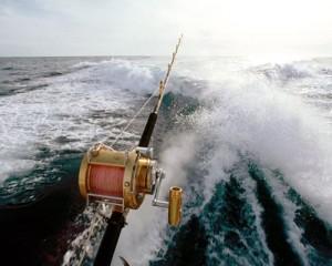 sewa kapal speedboat mancing - mancing di kapal