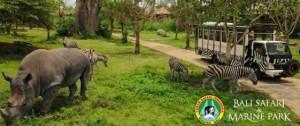 Bali-Safari-and-Marine-Park-endangered
