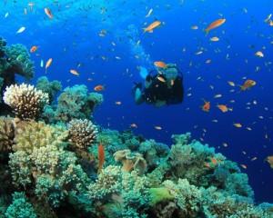 Bali Scuba Diving - Nusa Dua, Amed, Tulamben, Padang Bay, Nusa Penida, Menjangan Island