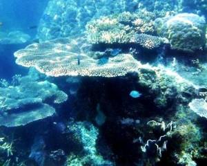 underwater spot