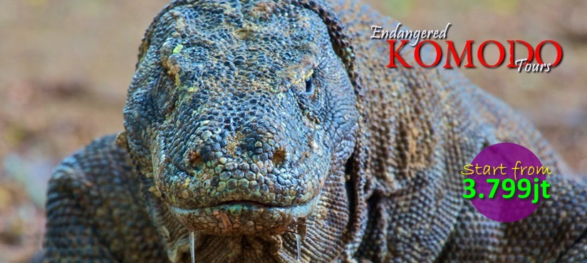 Endangered Komodo Tours
