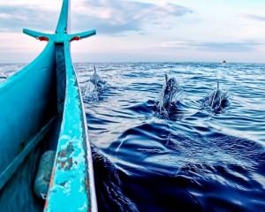 Exciting-Teluk-Kiluan-Tour-Hunting-Lumba-Lumba