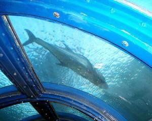 Tour-Pulau-Putri-Resort-Undersea-Aquarium