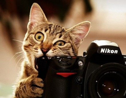 Seni Fotografi Kamera