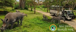 Bali-Safari-and-Marine-Park-endangered
