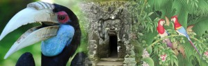 bali-bird-park-endangered