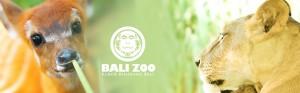 balizoo-park-endangered