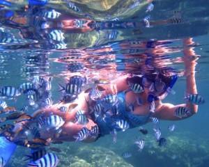 Karjaw-Underwater