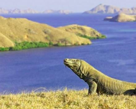endangered komodo island tour
