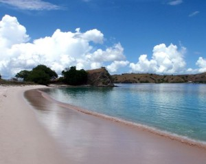 endangered-komodo-island-tour-pink-beach