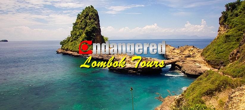 Endangered Lombok Tour - Banner
