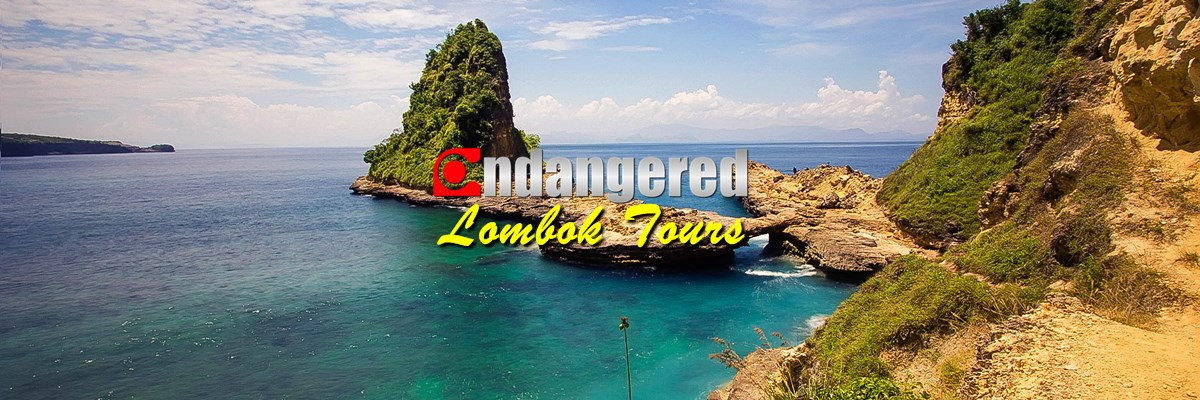 Endangered Lombok Tour