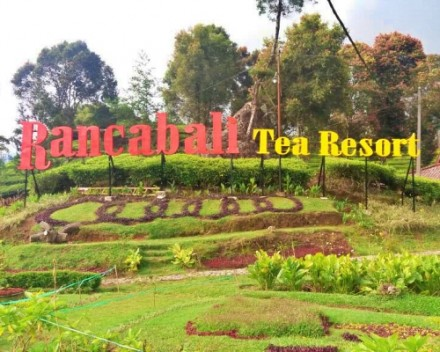 Reservasi Rancabali Tea Resort - Endangered Tour