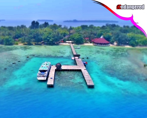 Pulau Pantara view Drone